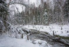 一条小河在冬天森林里 免版税库存图片