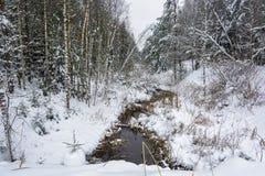 一条小河在冬天森林里 图库摄影