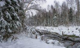 一条小河在冬天森林里 库存照片