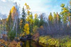 一条小河在森林流动在沼泽中间 免版税库存图片