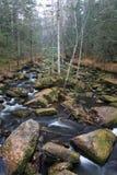 一条小河在森林里 免版税库存照片