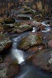 一条小河在森林里 免版税库存图片