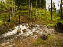 一条小河在森林,岩溶的春天的起源 库存照片