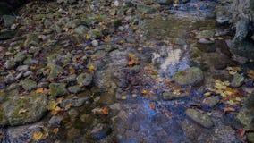一条小河在森林 库存照片