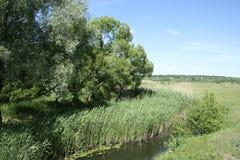 一条小河的绿色岸 免版税库存图片