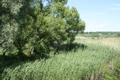 一条小河的绿色岸 库存照片