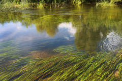 一条小河的表面 免版税库存照片