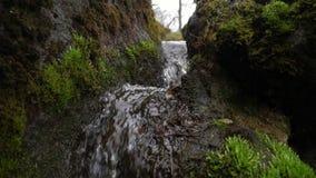 一条小河的风景看法在卡利柯治公园 影视素材