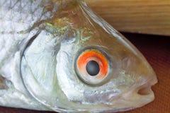 一条小河鱼提出特写镜头 免版税库存照片