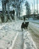 一条小狗在雪道站立在村庄 库存照片