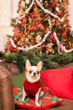 一条小狗坐在一把皮革扶手椅子的一个枕头反对b 库存图片