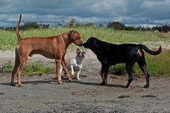 一条小的好奇狗的一个坚硬地方 免版税图库摄影
