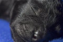 一条小的小狗 免版税库存照片