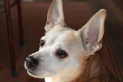 一条小的狗 图库摄影