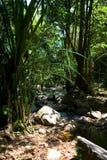 一条小美丽如画的河在密林流动 库存照片