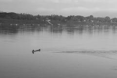 一条小船的一个人在黎府的湄公河 免版税图库摄影