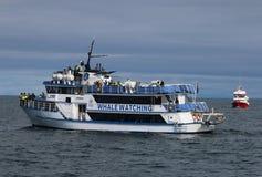 一条小船的游人在观看在雷克雅未克的鲸鱼 冰岛 免版税库存照片