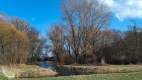 一条小运河在森林 免版税库存图片