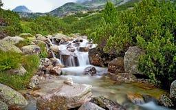一条山河的在瀑布Skok附近的水有岩石的和矮人杉木在高Tatras 美丽的斯洛伐克 库存图片