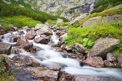 一条山河的在瀑布Skok附近的水有岩石的和矮人杉木在高Tatras 美丽的斯洛伐克 图库摄影