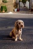 一条幼小狗坐沥青 库存图片