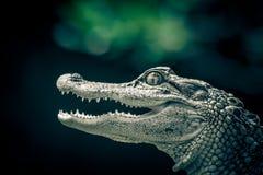 一条幼小鳄鱼的画象 库存图片