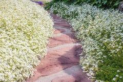 一条弯曲的庭院道路渐近了与石头风通过有戴西的一个四季不断的庭院 免版税库存图片