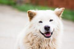 一条微笑的狗 免版税库存图片