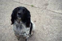 一条忠诚的狗永远将等候您的回归 免版税库存图片