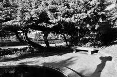 一条怀乡长凳的好的看法 免版税库存照片