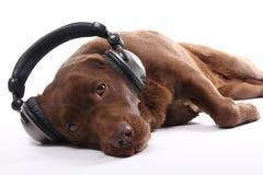一条愉快的狗的美丽的画象 免版税库存照片