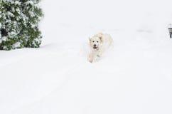 一条愉快的狗 免版税库存图片