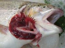 一条新鲜的死的鱼的鳃 免版税库存图片