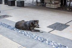 一条无家可归的哀伤的面露倦容的狗在塞萨罗尼基街道在  库存照片
