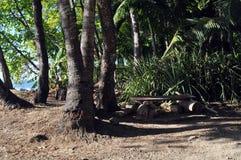一条暂时长凳在森林里在哥斯达黎加 免版税库存照片
