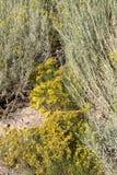 一条暗藏的道路穿过干燥仙人掌植物 库存照片