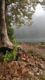 一条有雾的小河的场面 图库摄影