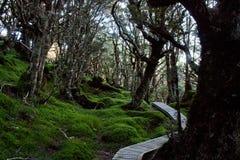 一条木板走道通过Humpridge步行的一个不可思议的森林在Fiordland/南方在南岛在新西兰 库存照片