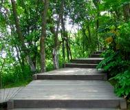 一条木道路穿过一个竹森林 免版税图库摄影