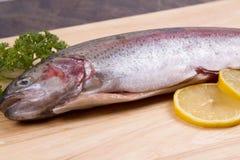 一条未加工的鳟鱼 库存图片