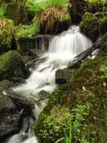 一条未触动过的小河通过Keniveil 库存照片