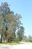 一条未铺砌的路在一个热的夏日 免版税图库摄影