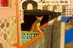 一条机敏的狗街市圣文森特 免版税库存图片
