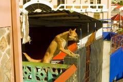 一条机敏的狗街市圣文森特 免版税库存照片