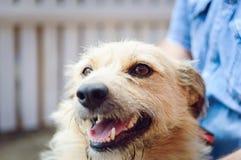 一条杂种狗的纵向 免版税图库摄影
