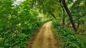 一条村庄路在阿尔瓦尔,拉贾斯坦,印度 库存照片