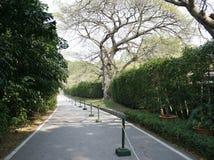一条树被排行的路通过公园 免版税库存图片