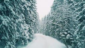 一条森林路的低空空中射击在雪的 影视素材