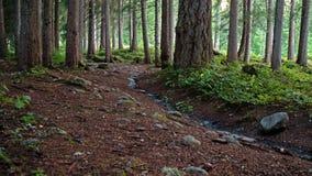 一条森林道路在一个黑暗的高山森林里在瑞士 杉树和岩石显示带领入森林的道路 免版税库存图片