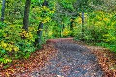 一条森林道路的HDR在软的焦点 库存图片